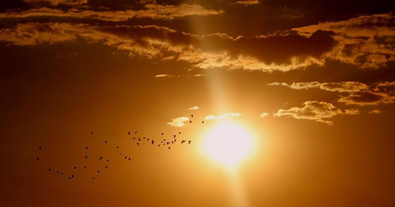 En bild på solen på himlen, några moln och fåglar flyger förbi.